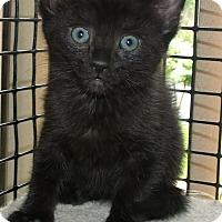 Adopt A Pet :: PAGE - Acme, PA