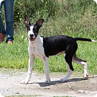 Adopt A Pet :: Jem Griffiths - Jersey City, NJ