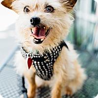 Adopt A Pet :: Doris Devito weighs 7 lbs! - Los Angeles, CA