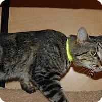 Adopt A Pet :: Drew - Whittier, CA