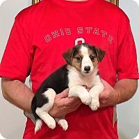 Adopt A Pet :: Mia - New Philadelphia, OH