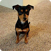 Adopt A Pet :: Finnie - Tampa, FL