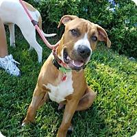 Adopt A Pet :: MEET DUKE! - Seminole, FL