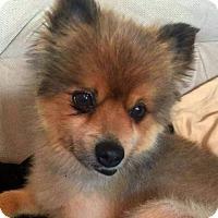 Adopt A Pet :: Tino - Colorado Springs, CO