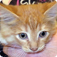 Adopt A Pet :: 318246 - Wildomar, CA