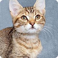 Adopt A Pet :: Jump Rope - Encinitas, CA