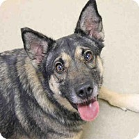 Adopt A Pet :: BALIEY - Decatur, IL