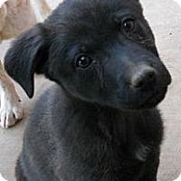 Adopt A Pet :: Jade - dewey, AZ