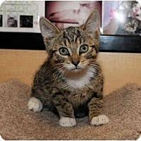 Adopt A Pet :: Chauncy - Farmingdale, NY