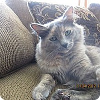 Adopt A Pet :: Missy - Jeffersonville, IN