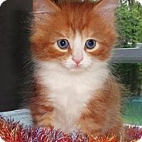 Adopt A Pet :: Corey - N. Billerica, MA