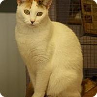 Adopt A Pet :: LIberty - Dover, OH