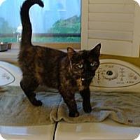 Adopt A Pet :: Olivia - Spotsylvania, VA