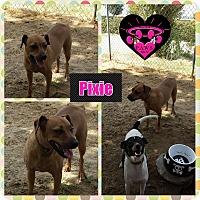 Adopt A Pet :: Pixie - Fowler, CA