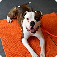 Adopt A Pet :: Martin - Atlanta, GA