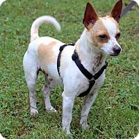 Adopt A Pet :: Wiggles - Bedford, VA