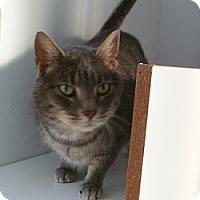 Adopt A Pet :: Gracie Bea - Hamburg, NY