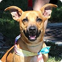 Adopt A Pet :: Roo - Richmond, VA