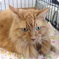 Adopt A Pet :: Morris - Cleburne, TX