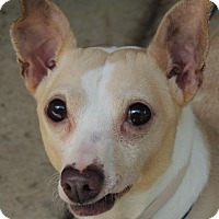Adopt A Pet :: Jamie is discounted - Allentown, PA
