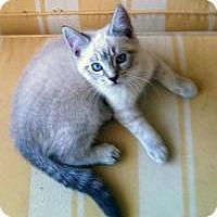 Adopt A Pet :: Kamiko - Mission Viejo, CA