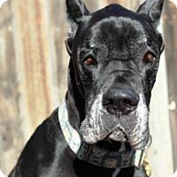 Adopt A Pet :: Siere - Aurora, CO