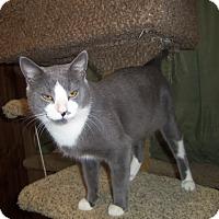 Adopt A Pet :: JOEY - Medford, WI