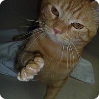 Adopt A Pet :: Ali - Hamburg, NY