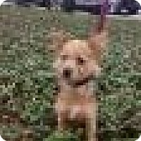 Terrier (Unknown Type, Medium) Mix Dog for adoption in Tampa, Florida - RALPH (GS)