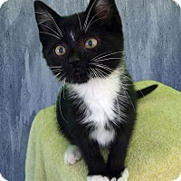 Adopt A Pet :: Spencer - New Castle, PA