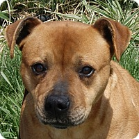 Pit Bull Terrier Mix Dog for adoption in Monroe, Michigan - Zaida