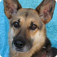Adopt A Pet :: Bashful Rasnake - Cuba, NY
