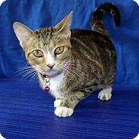 Adopt A Pet :: MARGO - LAFAYETTE, LA