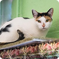 Calico Cat for adoption in Freeport, New York - Bubbles
