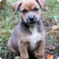 Adopt A Pet :: Farley - Danbury, CT