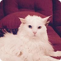 Adopt A Pet :: Otis - O'Fallon, MO
