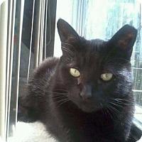 Adopt A Pet :: Miagi - Fenton, MO