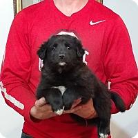 Adopt A Pet :: Maizie - South Euclid, OH