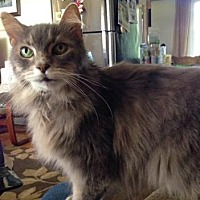 Adopt A Pet :: Gellie-*URGENT* - Richmond Hill, ON