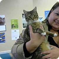 Adopt A Pet :: MAGIC - Louisville, KY