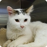 Adopt A Pet :: Tarzan - Elyria, OH
