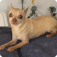 Adopt A Pet :: Amaya East Colonial Petco - Orlando, FL