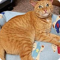 Adopt A Pet :: Elli *Deaf/CH* - Philadelphia, PA