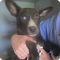 Adopt A Pet :: Mitch (PENDING!) - Chicago, IL
