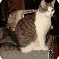 Adopt A Pet :: Tinker - Spotsylvania, VA