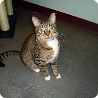 Domestic Mediumhair Cat for adoption in Montello, Wisconsin - **Ella