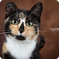 Adopt A Pet :: Tinsel - Eagan, MN
