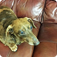 Adopt A Pet :: Duncan - Weston, FL