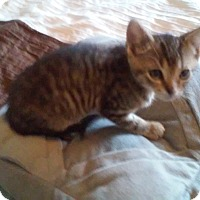 Adopt A Pet :: Omer - Fairborn, OH