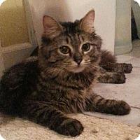 Adopt A Pet :: Scarlet - Raritan, NJ